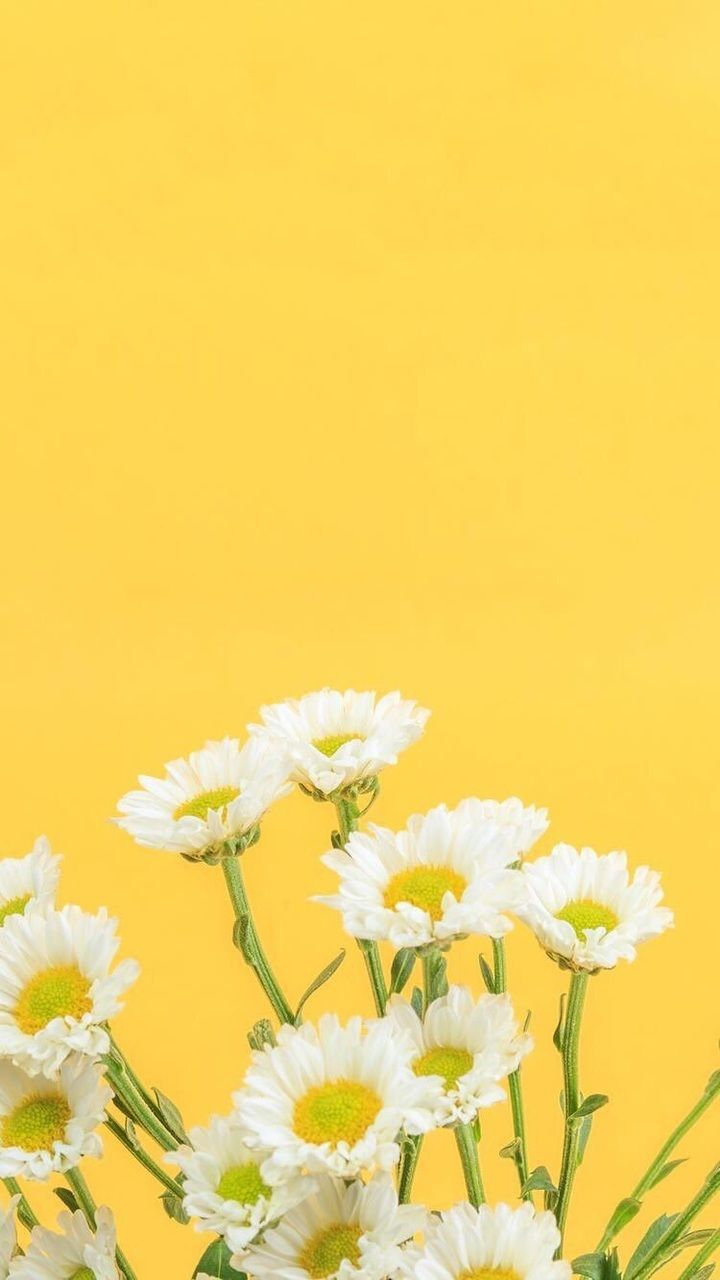 Yellow Floral Wallpapers Top Free Yellow Floral Backgrounds