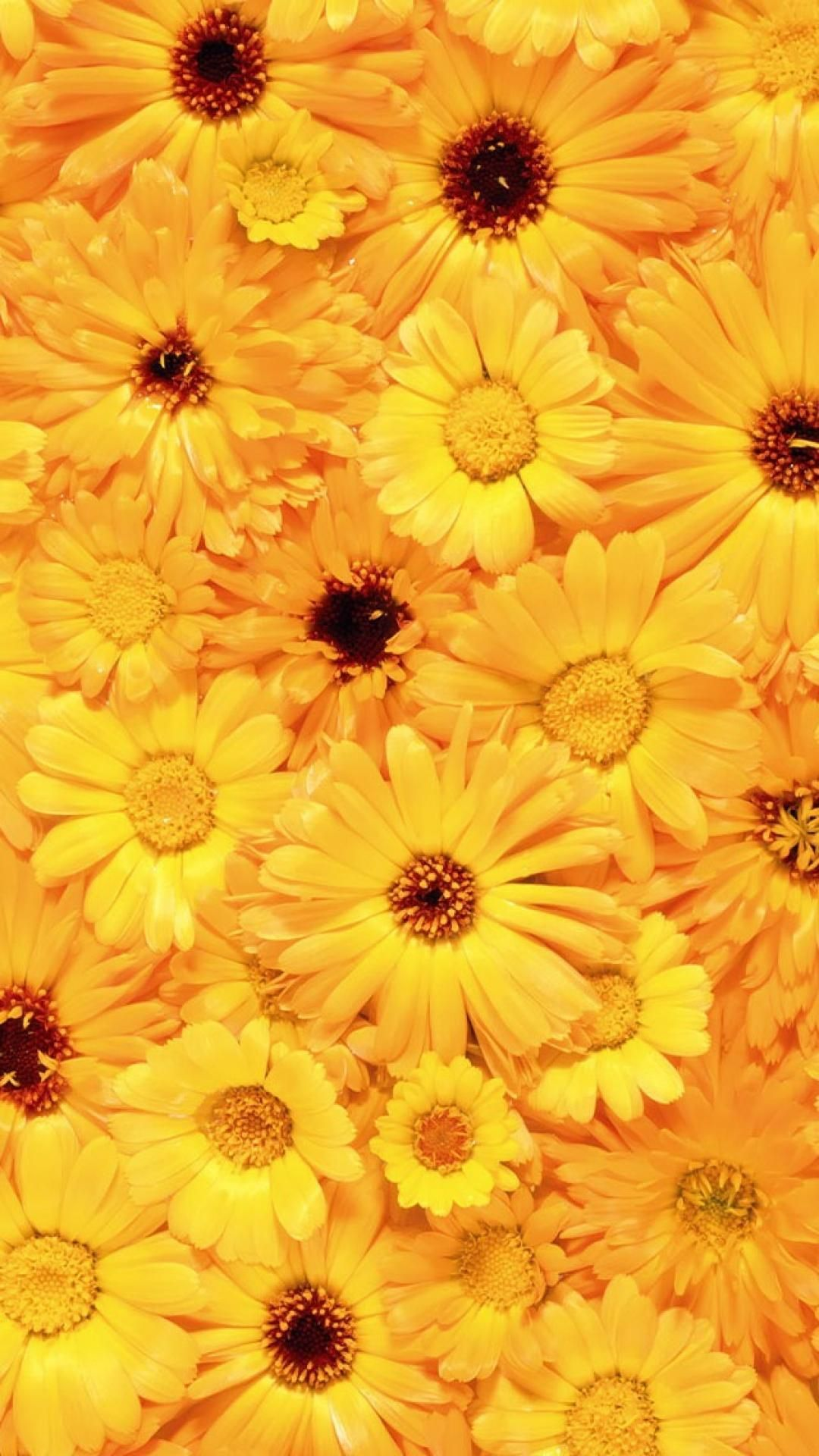 Yellow Floral Iphone Wallpapers Top Free Yellow Floral