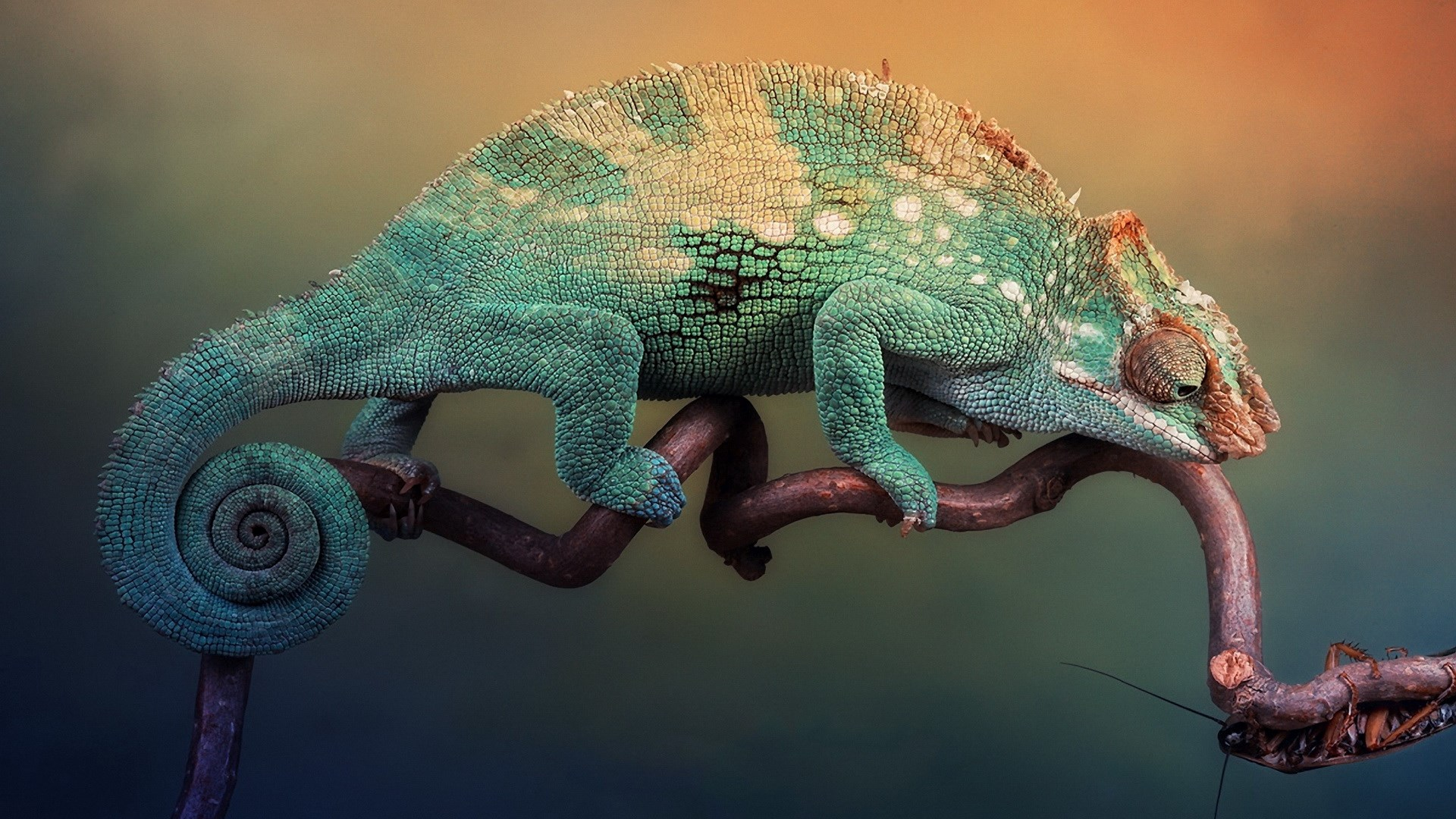 chameleon wallpapers  top free chameleon backgrounds