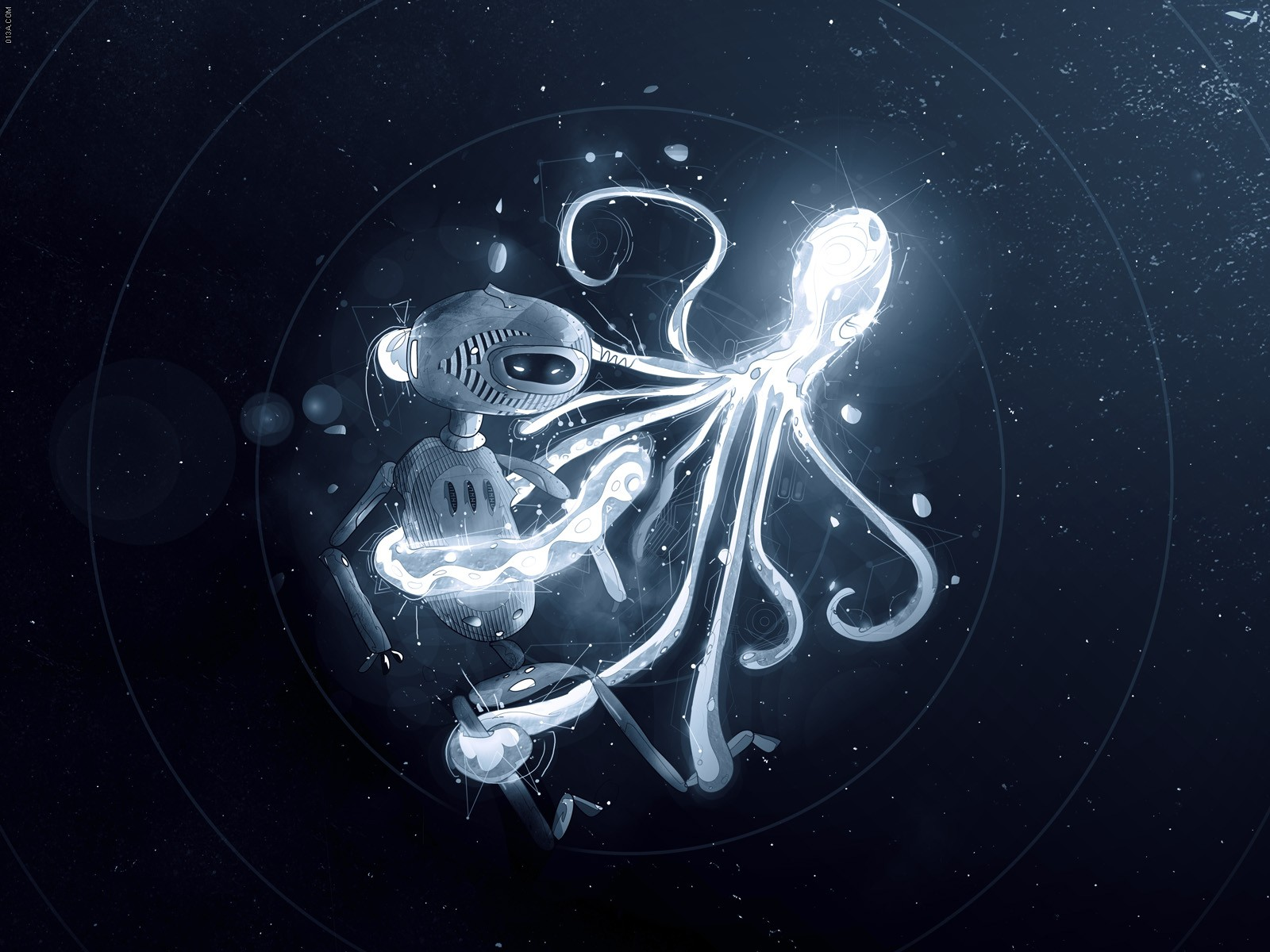 Octopus Wallpapers Top Free Octopus Backgrounds Wallpaperaccess