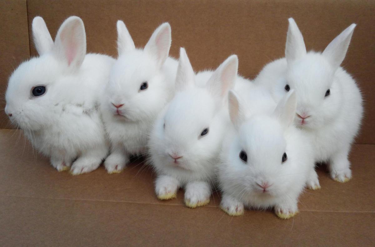 картинки одинаковых кроликов доме