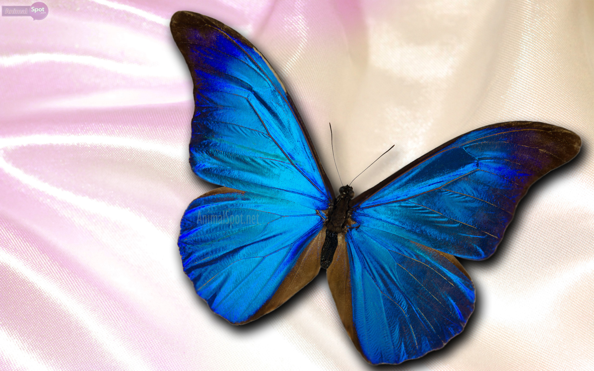 Turquoise Purple Butterfly Wallpapers Top Free Turquoise