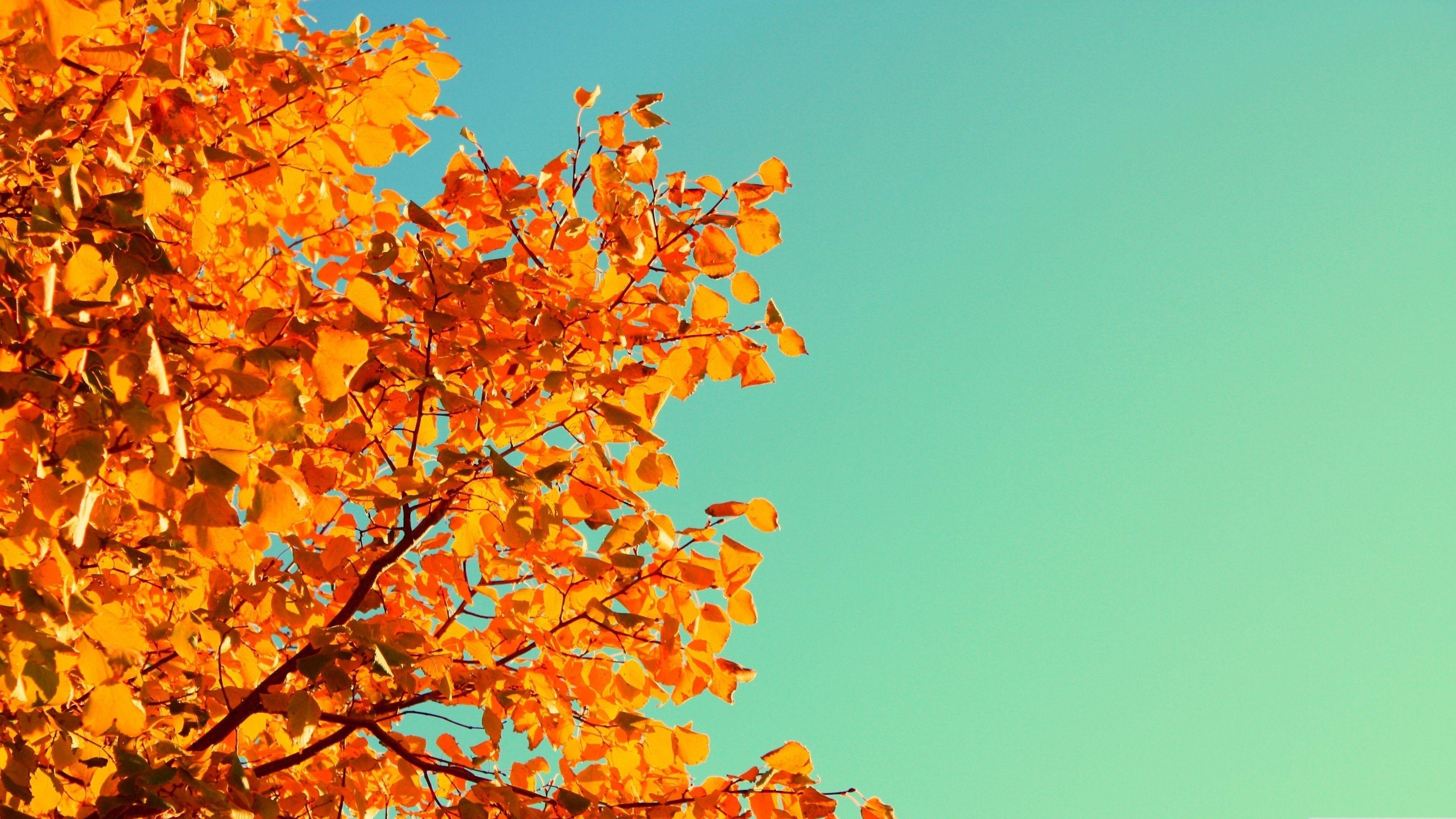 3840 X 2160 Autumn Wallpapers - Top ...
