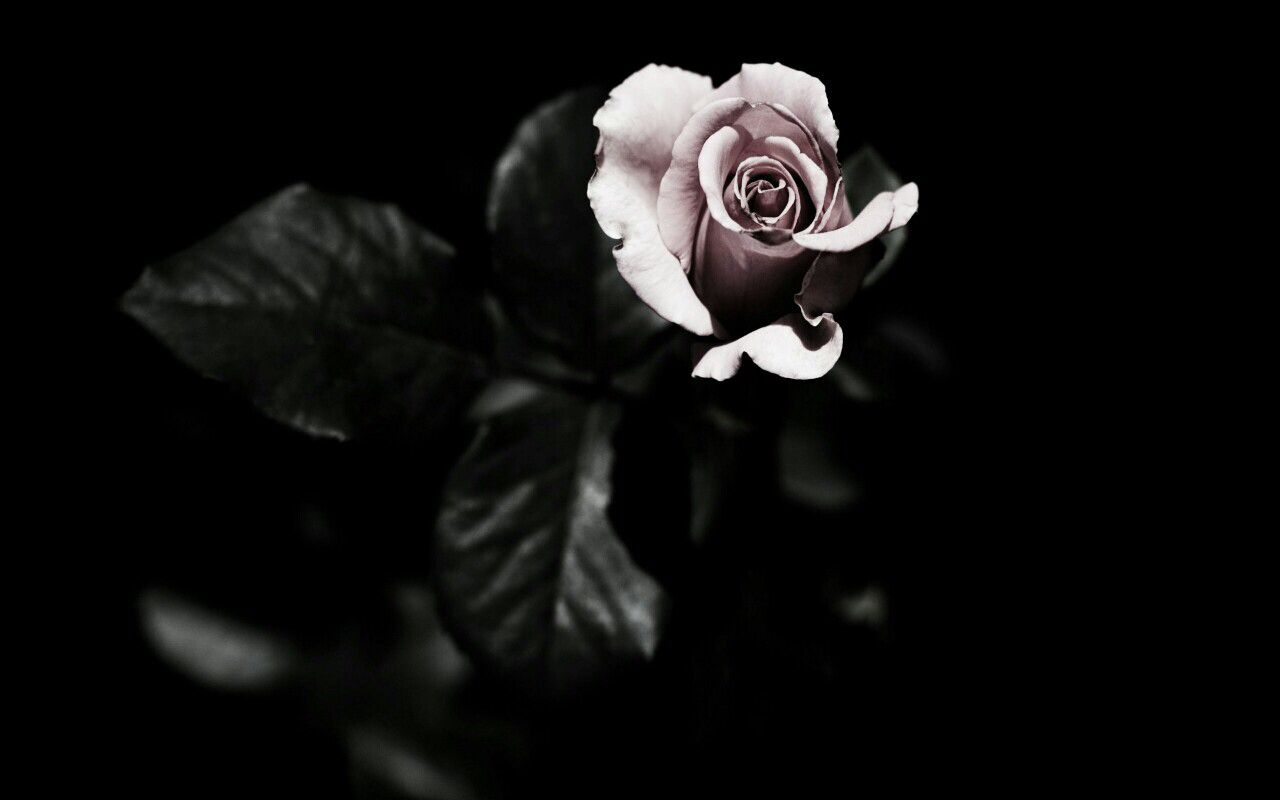 Grunge Rose Aesthetic Desktop Wallpapers Top Free Grunge