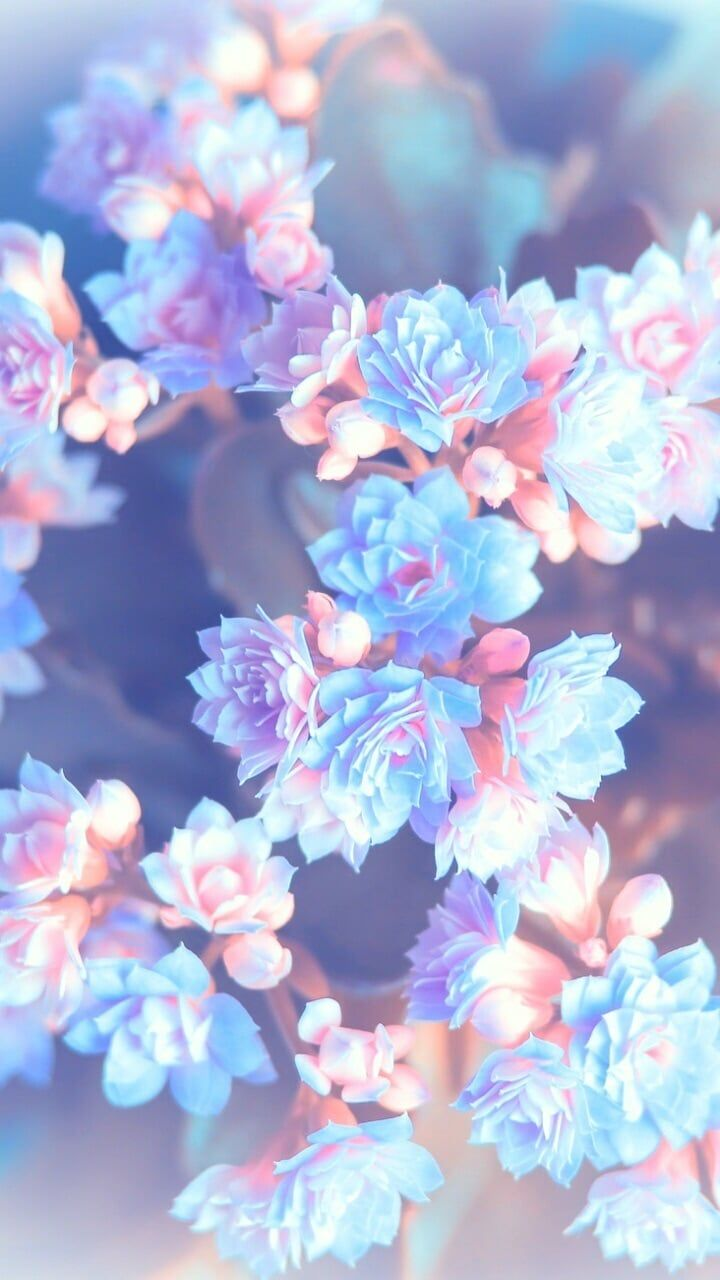 Blue Aesthetic Flower Wallpapers , Top Free Blue Aesthetic
