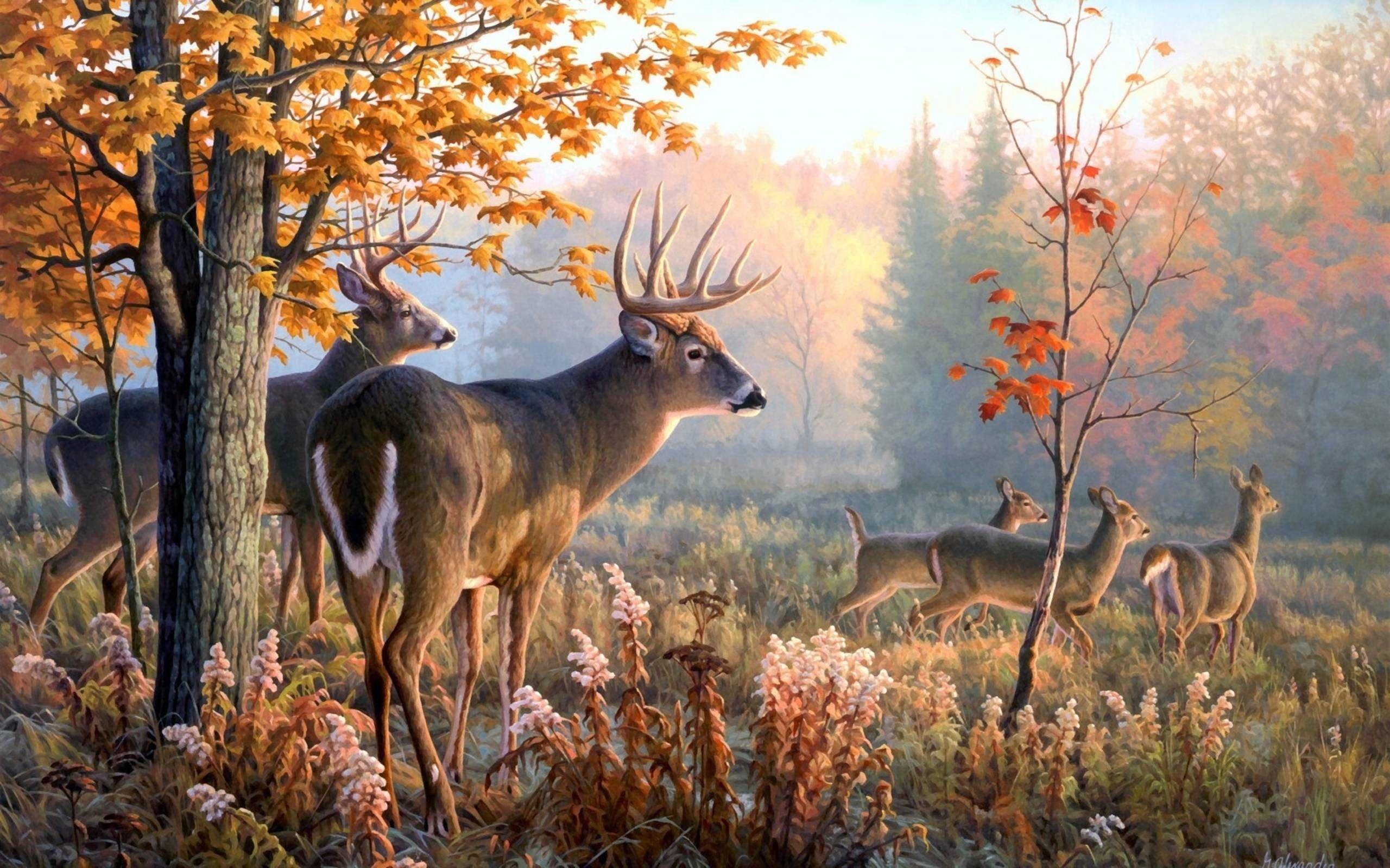 Buck Desktop Wallpapers Top Free Buck Desktop Backgrounds Wallpaperaccess