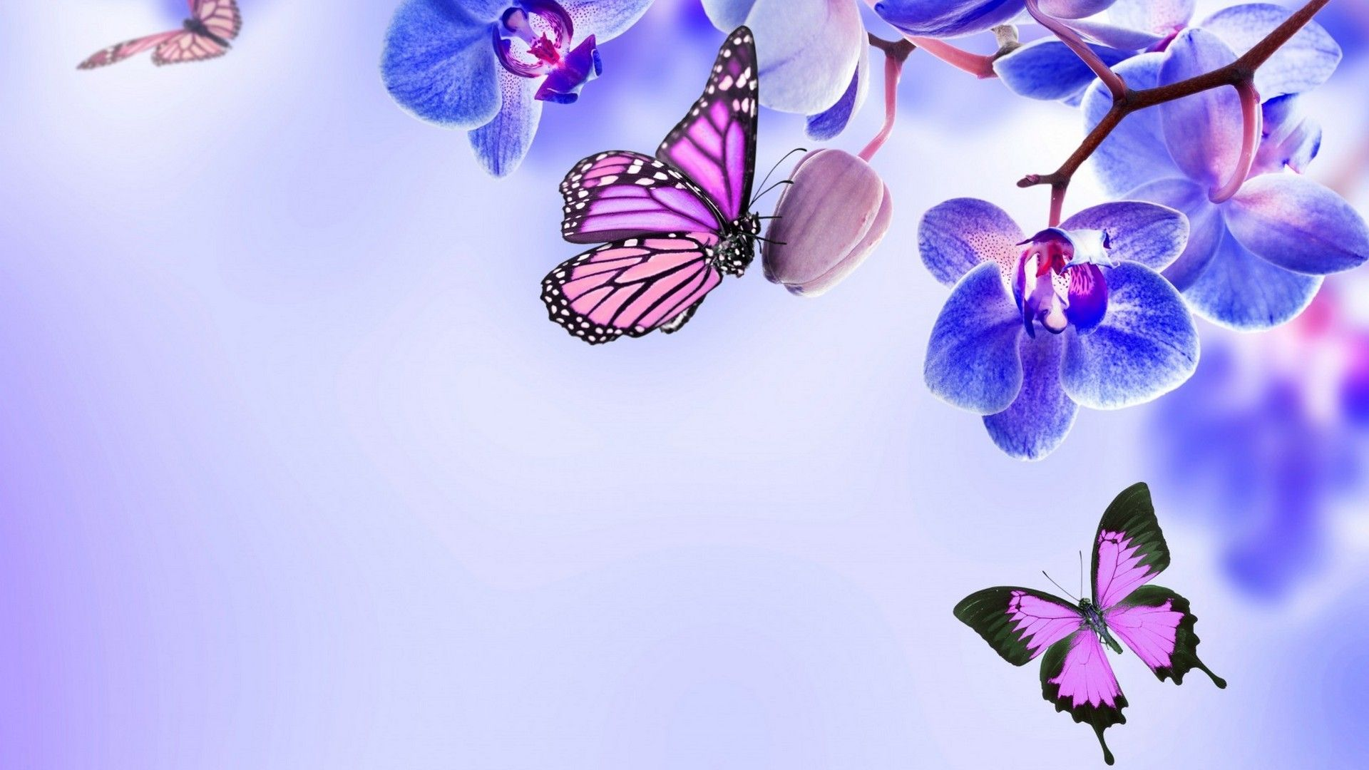 Butterfly Computer Wallpapers Top Free Butterfly Computer