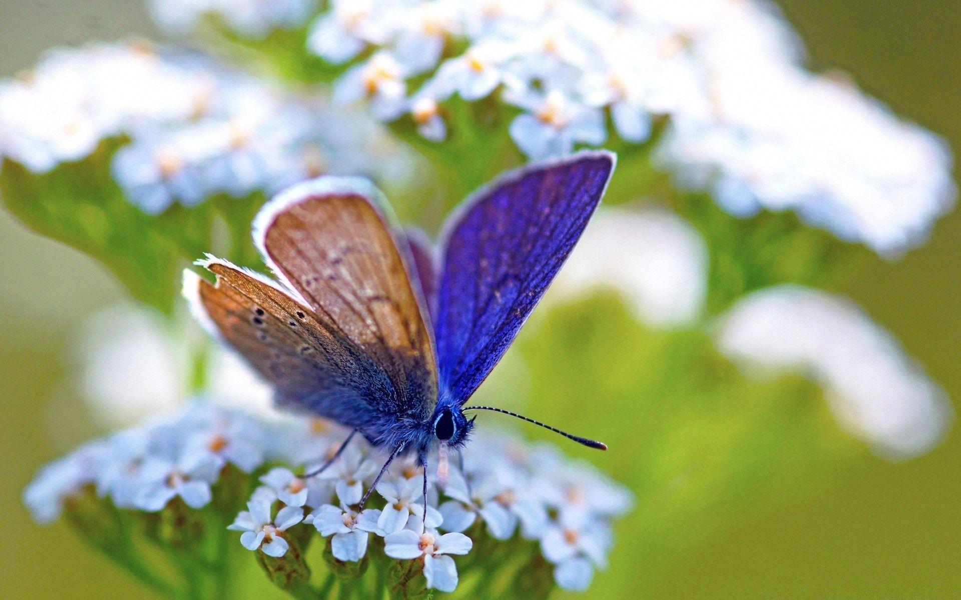 Purple Butterfly Desktop Wallpapers - Top Free Purple ...