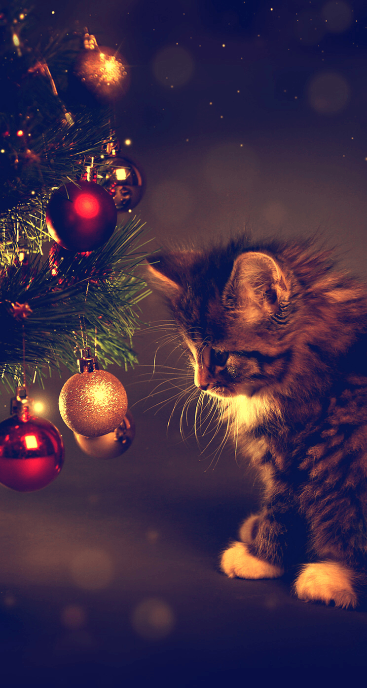 Cute Christmas Cat Wallpapers Top Free Cute Christmas Cat Backgrounds Wallpaperaccess