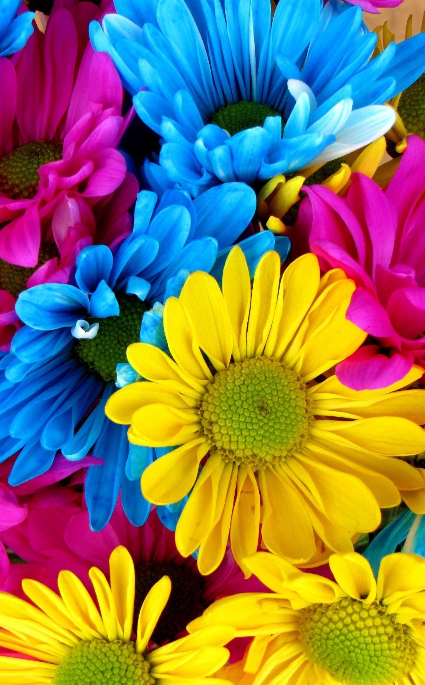 1440x2320 Hoa đầy màu sắc xanh vàng hồng hình nền 4K