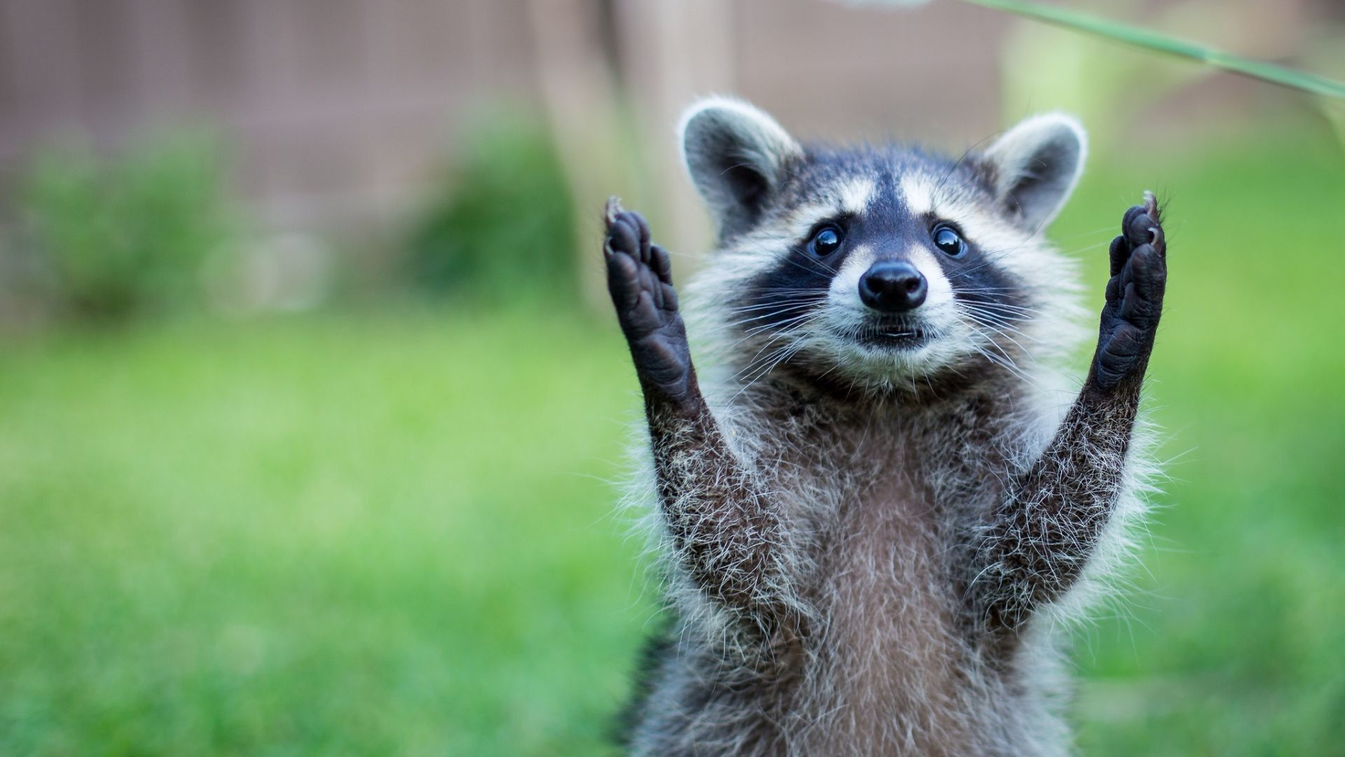 Animal Desktop Wallpapers Top Free Animal Desktop