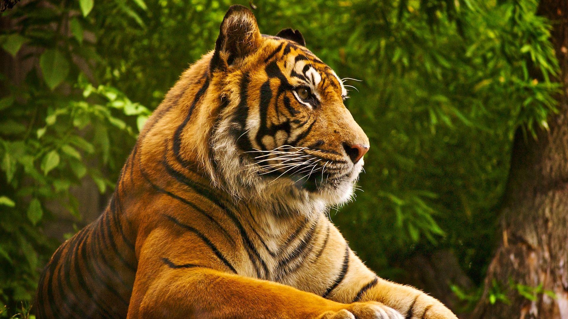 1920X1080 HD Animals Wallpapers - Top Free 1920X1080 HD Animals ...