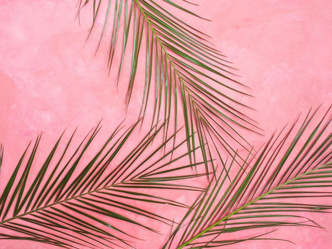 Pastel Pink Aesthetic Laptop Wallpapers Top Free Pastel Pink Aesthetic Laptop Backgrounds Wallpaperaccess