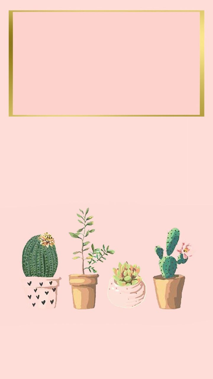 Aesthetic Succulents Wallpapers Top Free Aesthetic Succulents Backgrounds Wallpaperaccess