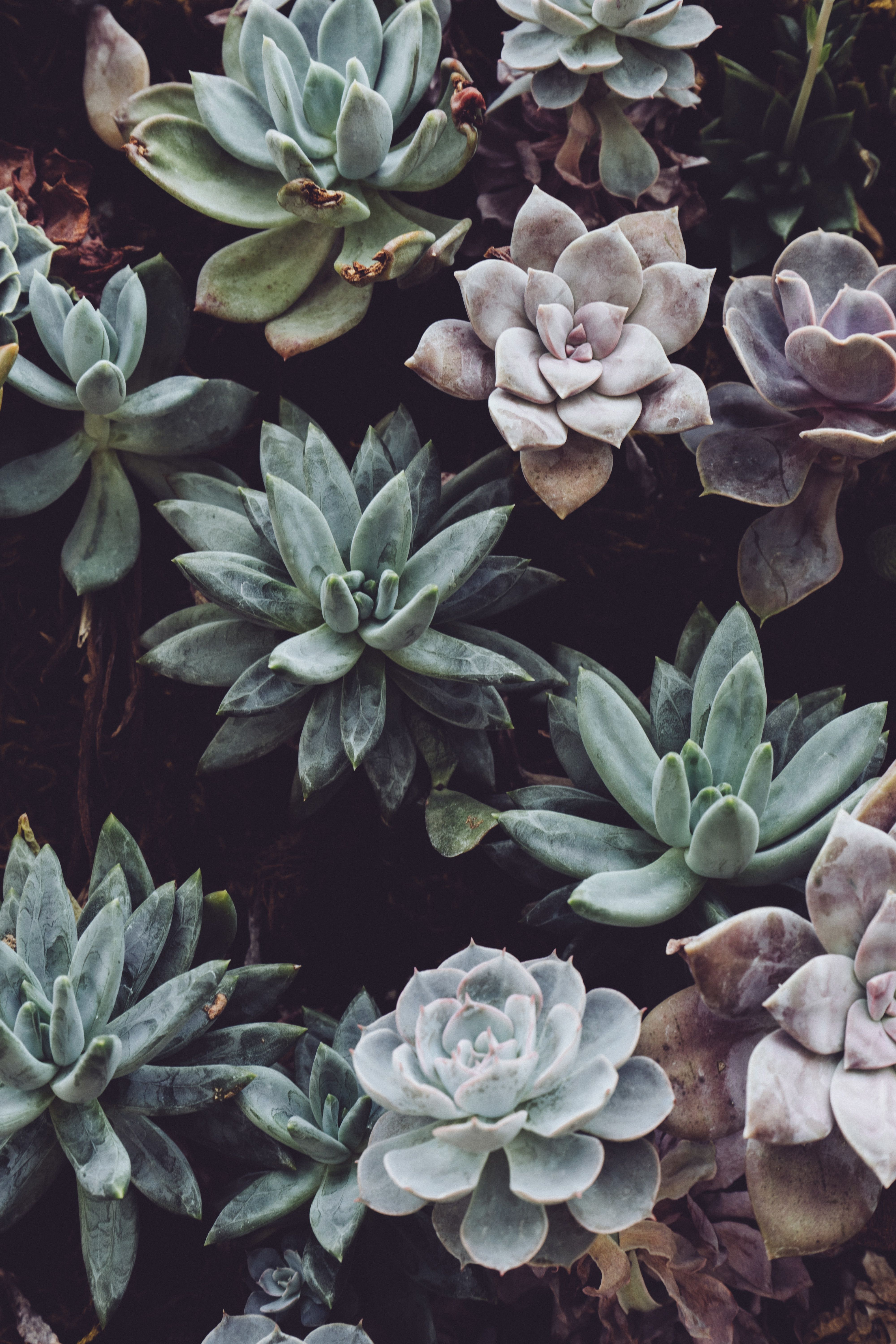 aesthetic succulents wallpapers