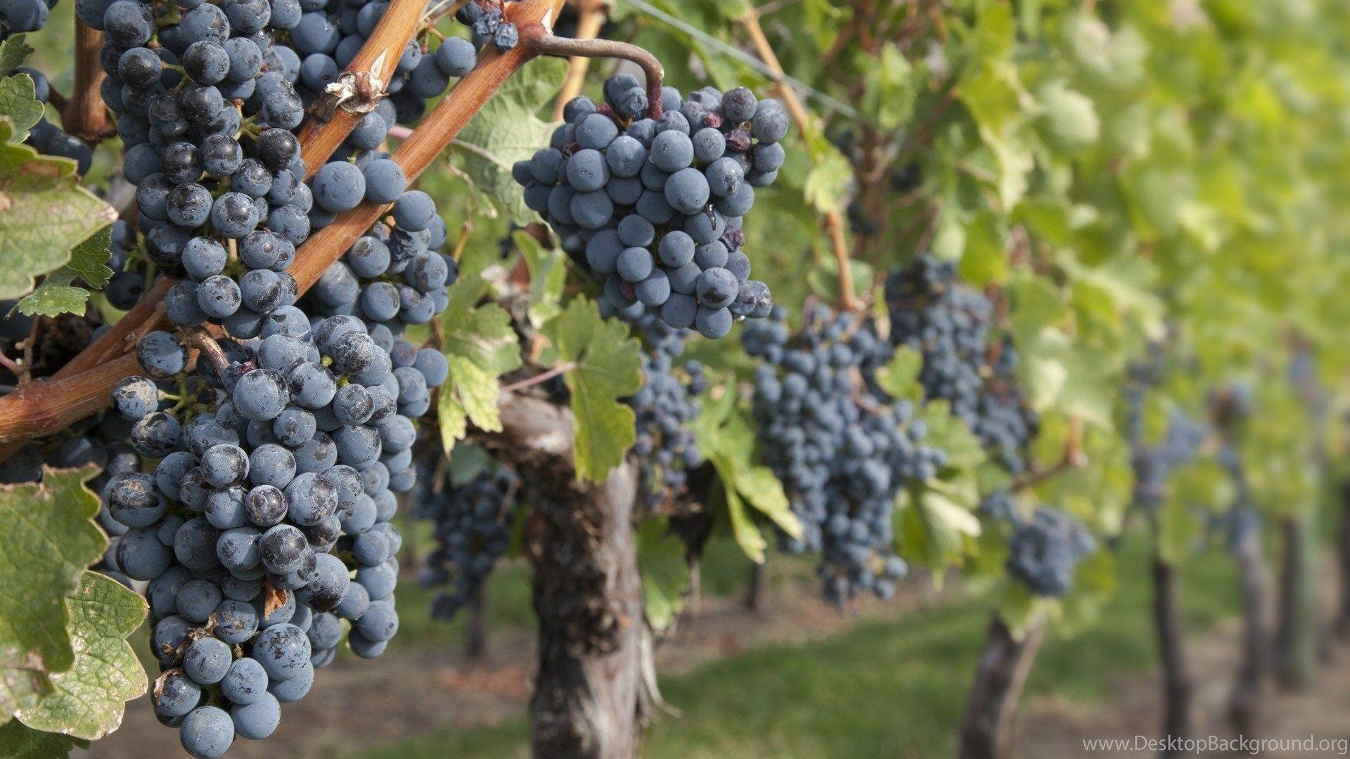 Vines Desktop Wallpapers Top Free Vines Desktop