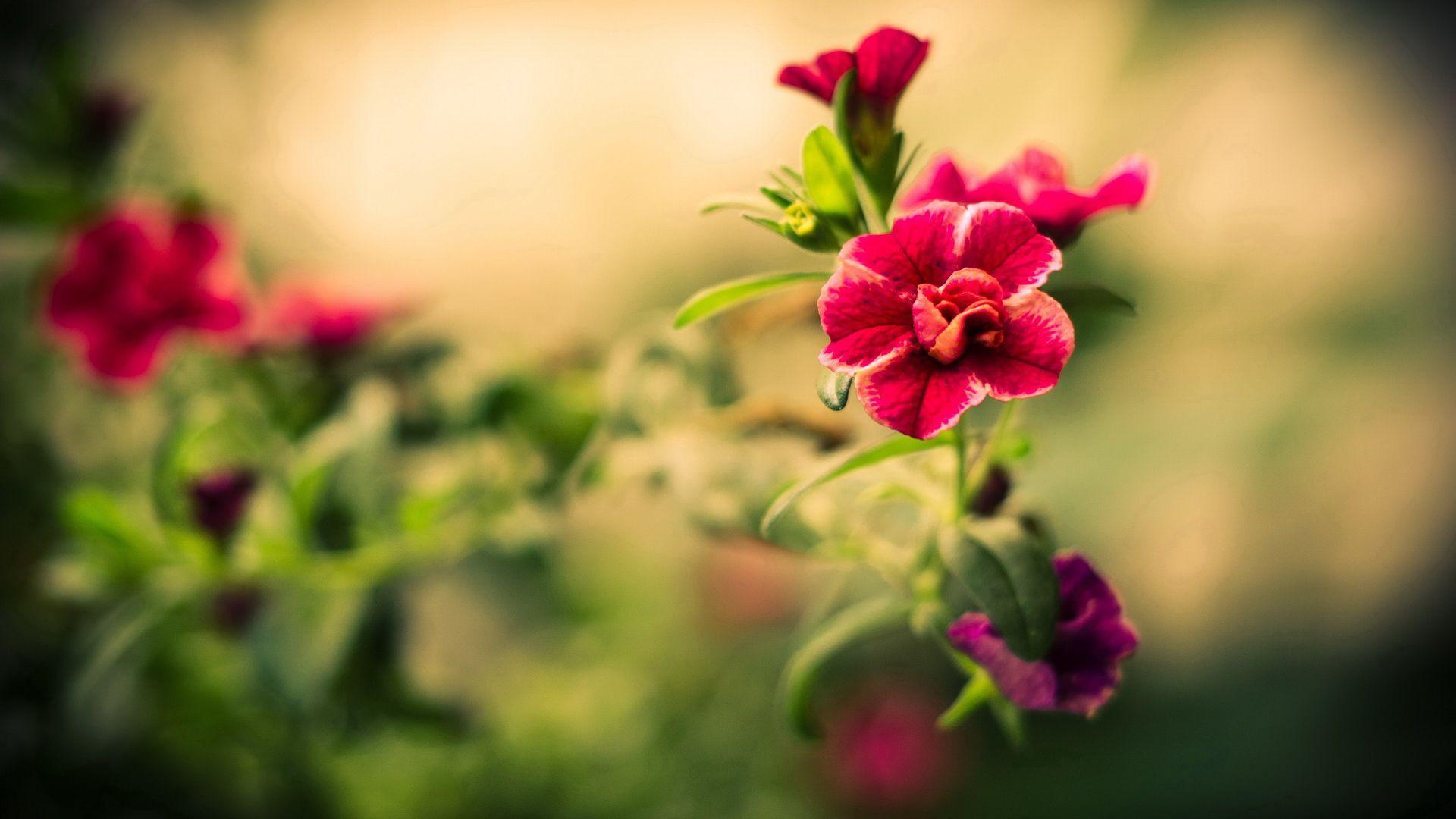 Best Of Flowers Hd Wallpapers Top Free Best Of Flowers Hd