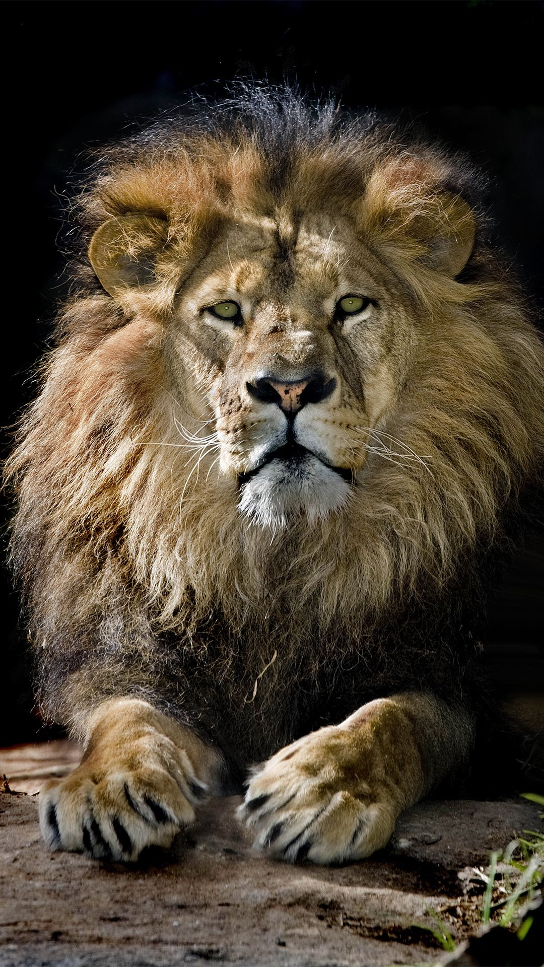 Lion King iPhone Wallpapers - Top Free Lion King iPhone ...