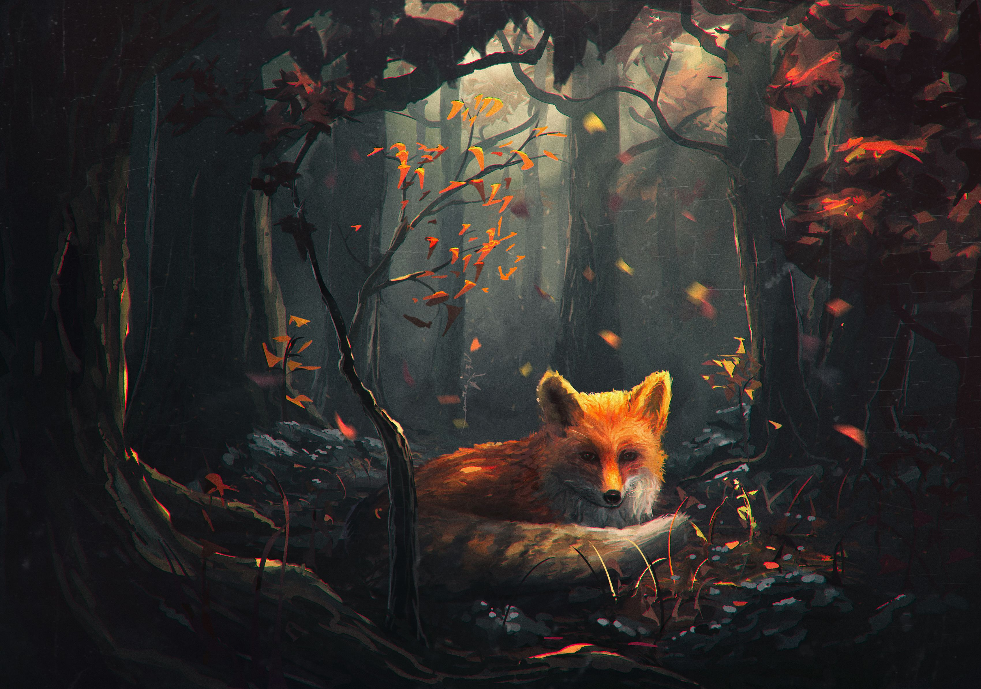 Black Fox Wallpapers Top Free Black Fox Backgrounds Wallpaperaccess