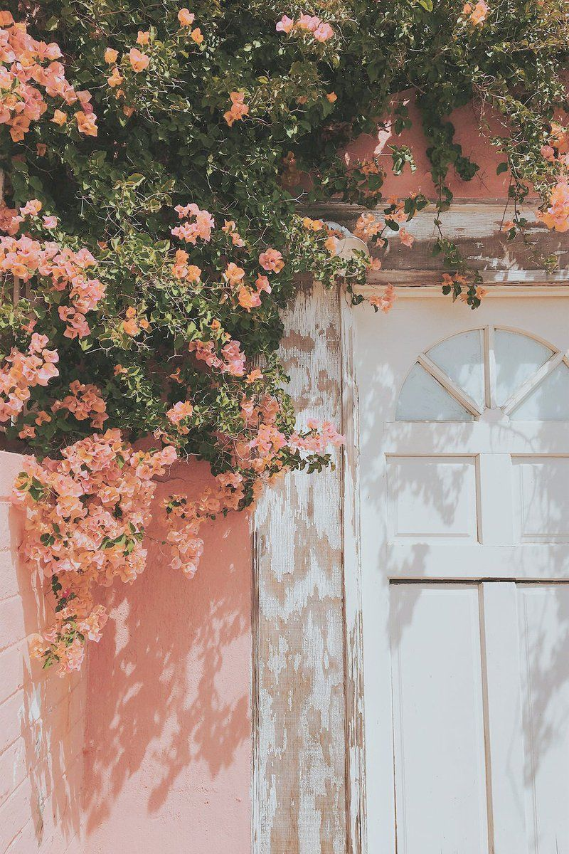 Peach Color Aesthetic Wallpapers Top Free Peach Color Aesthetic Backgrounds Wallpaperaccess Lol my aesthetic is changing the colors of other aesthetic posts to fit. peach color aesthetic wallpapers top