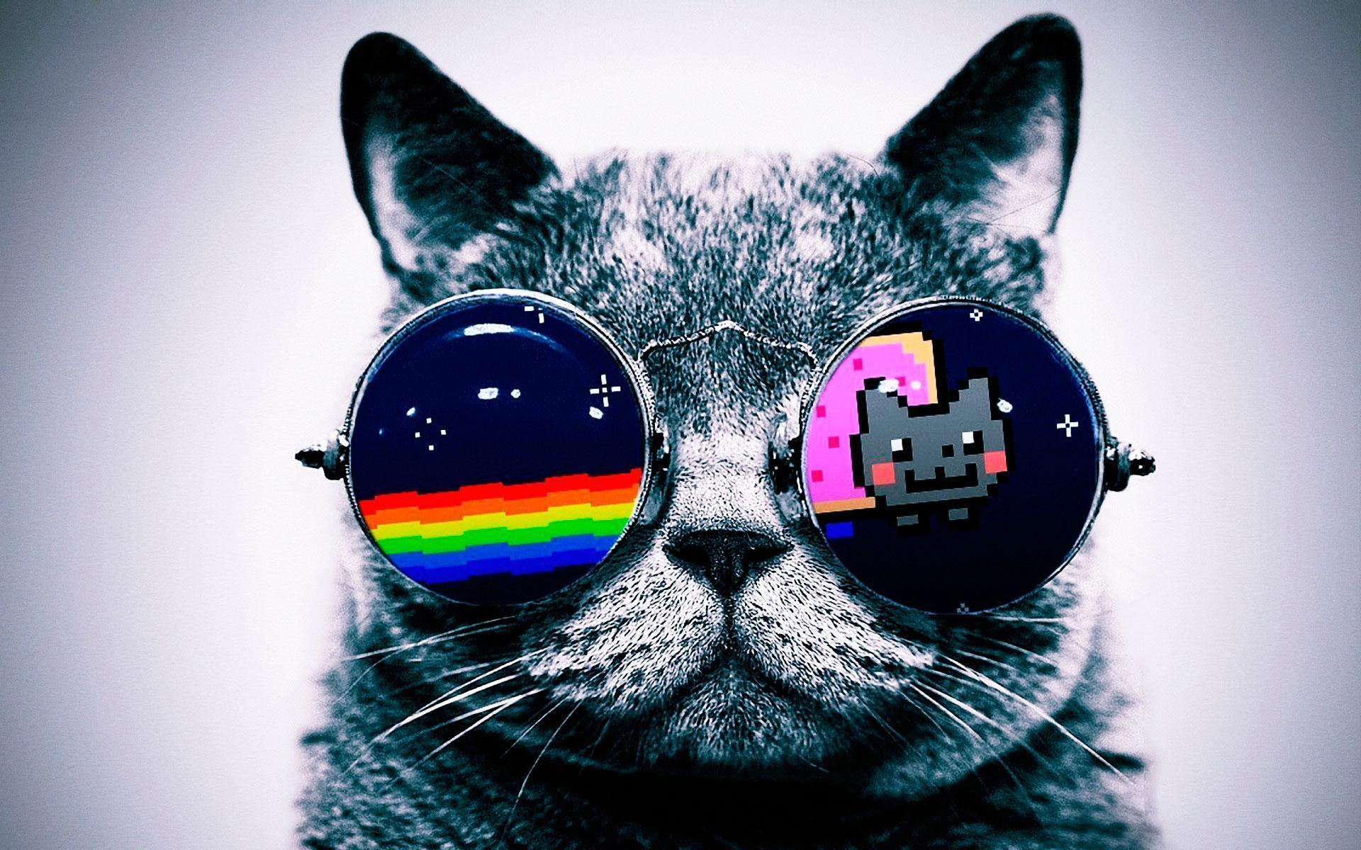 Cool Cat Wallpapers Top Free Cool Cat Backgrounds Wallpaperaccess