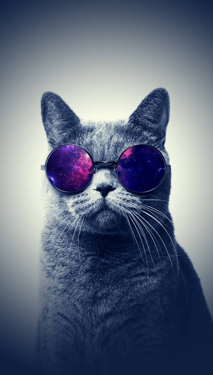 71 Best Free Cool Cat Wallpapers Wallpaperaccess