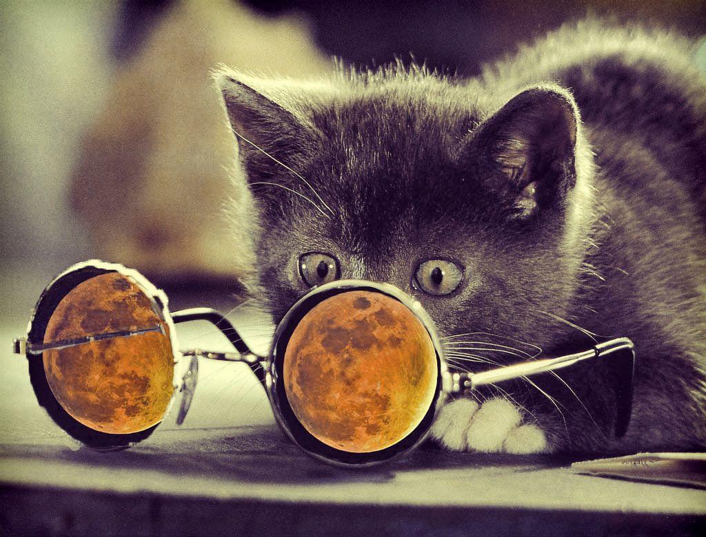 Cool Cat Desktop Wallpapers Top Free Cool Cat Desktop Backgrounds Wallpaperaccess