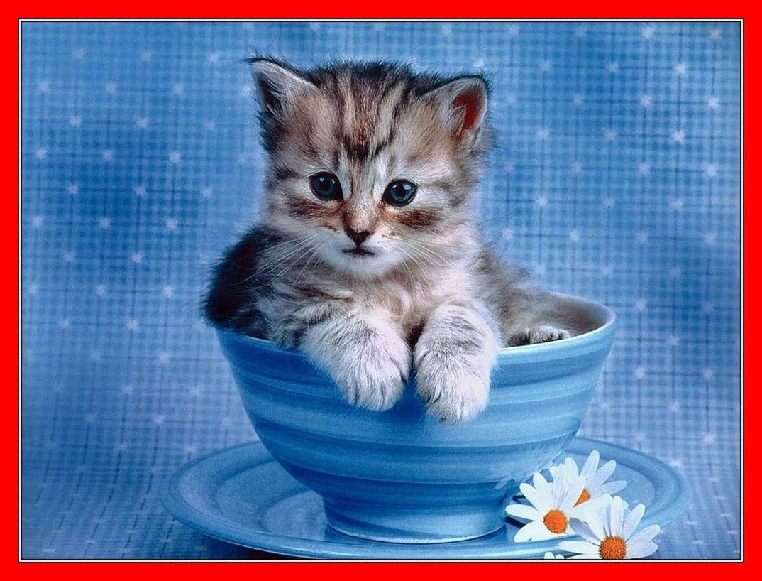 "750x1334 Cool Cat Wallpaper Iphone 6 | Animals Wallpaper And Also Sweet Cat ..."">"