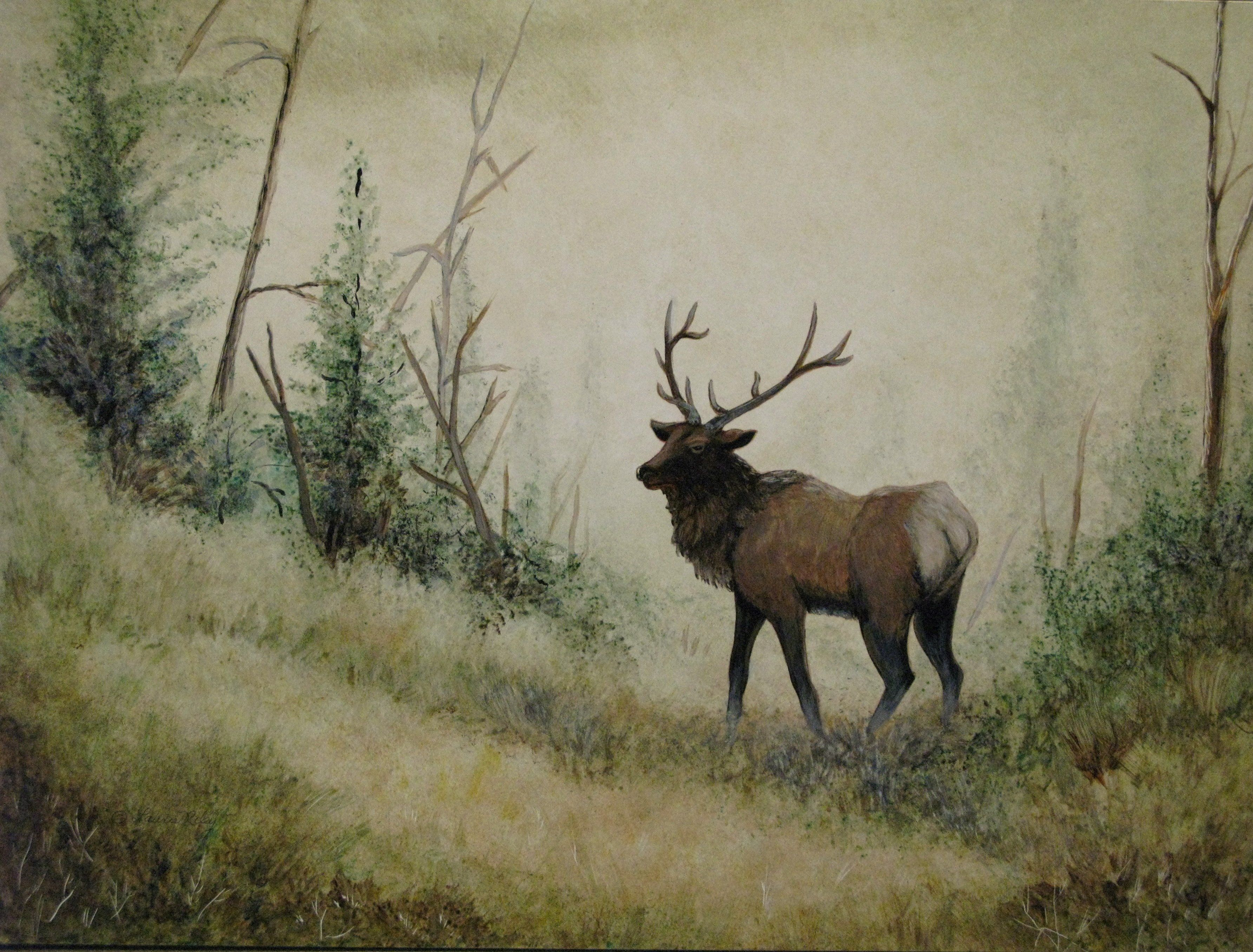 Elk Desktop Wallpapers - Top Free Elk
