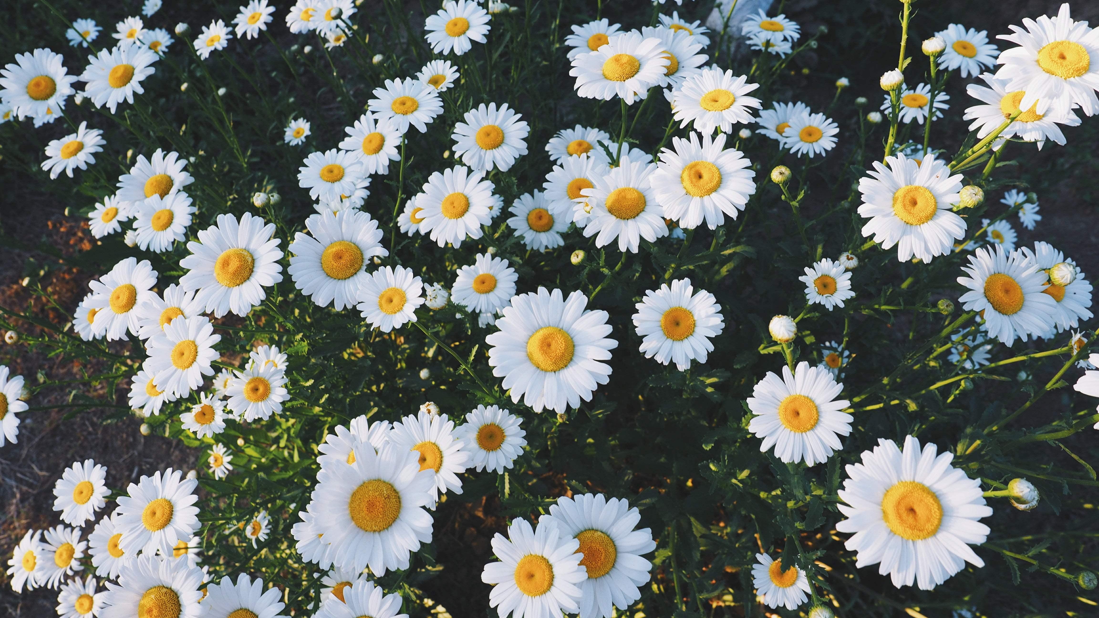 Aesthetic Flower Laptop Wallpapers Top Free Aesthetic Flower Laptop Backgrounds Wallpaperaccess
