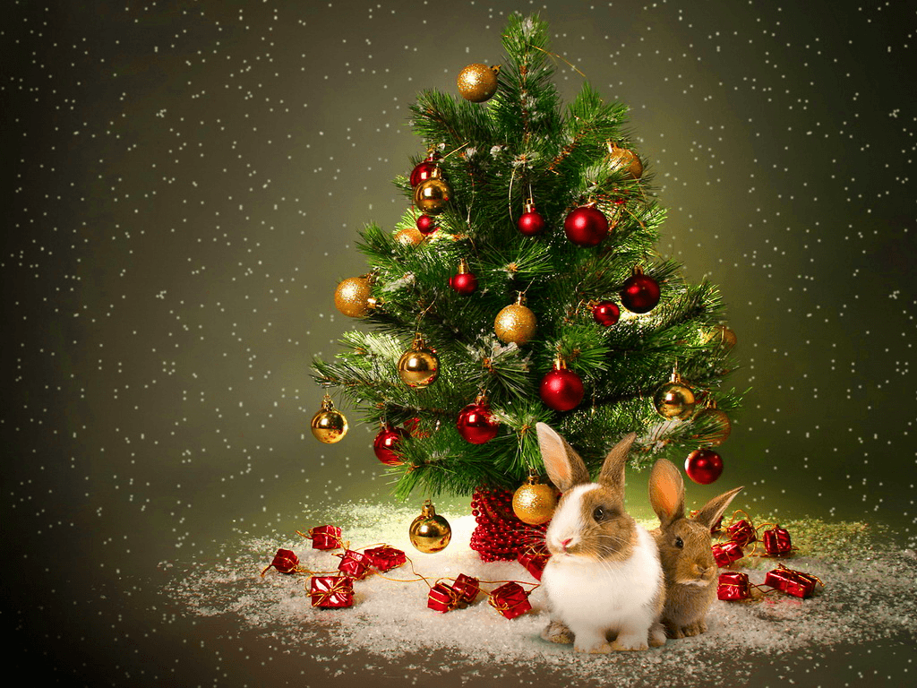 Magical Christmas Wallpapers Top Free Magical Christmas Backgrounds Wallpaperaccess