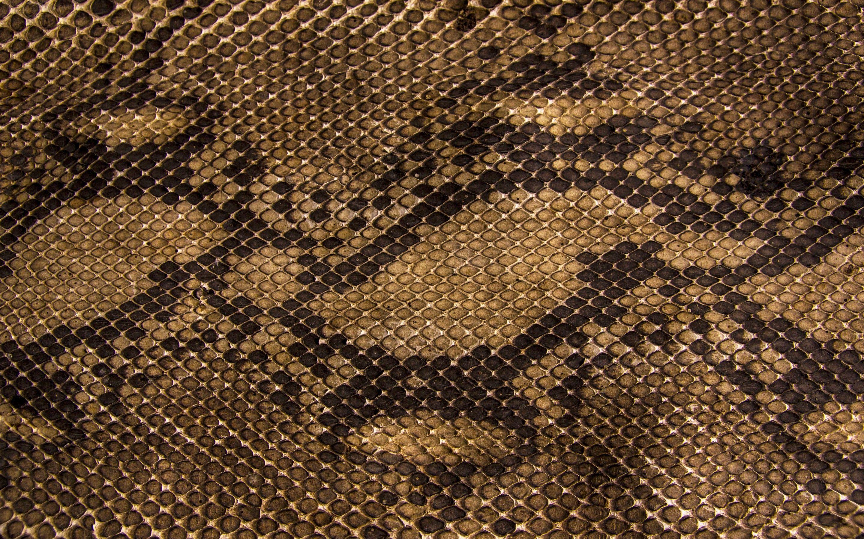 Snake Skin Iphone Wallpapers Top Free Snake Skin Iphone