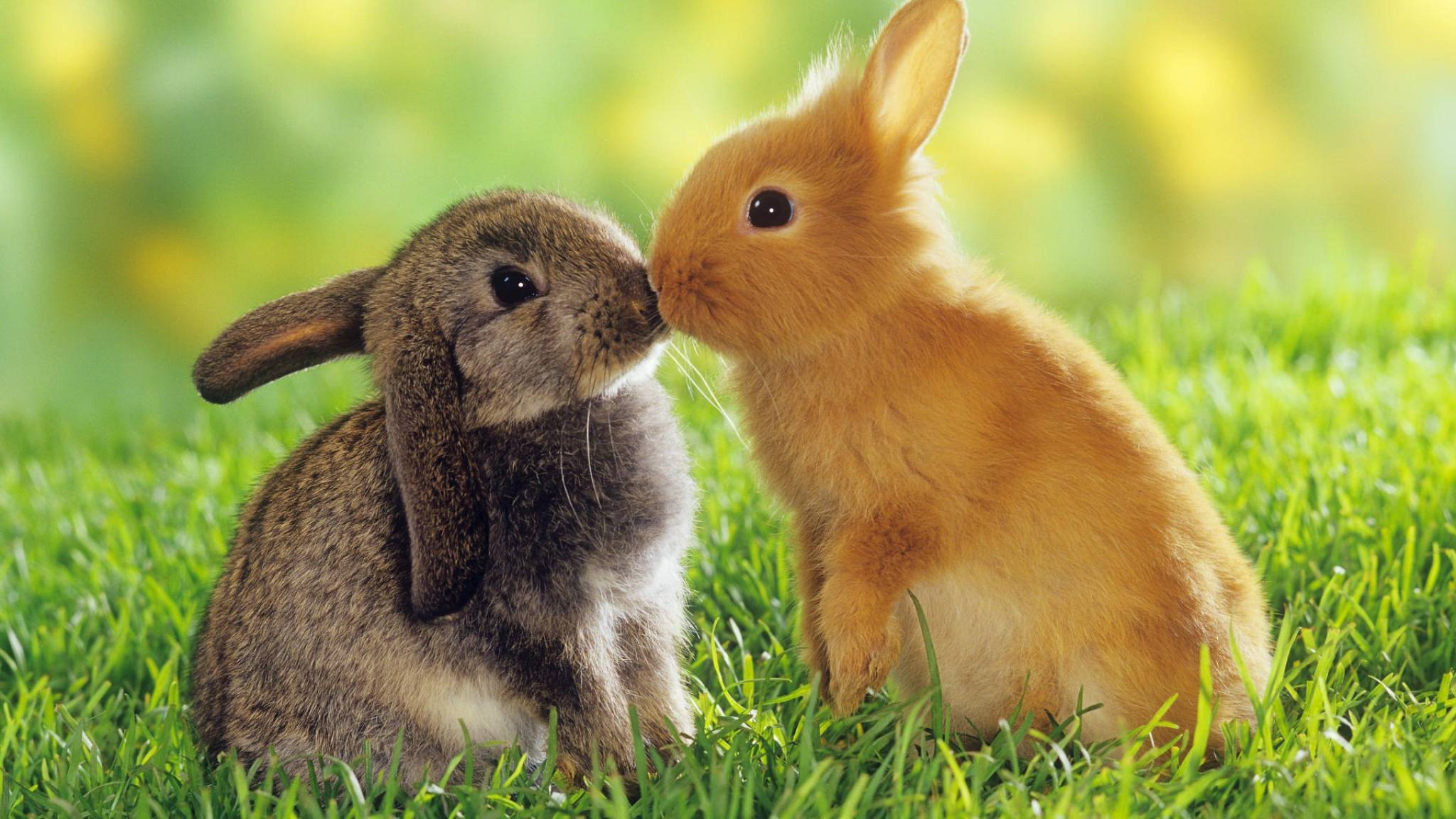 Rabbit Wallpapers Top Free Rabbit Backgrounds Wallpaperaccess