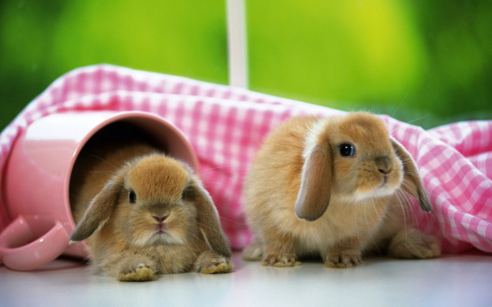 Bunny Wallpapers Top Free Bunny Backgrounds Wallpaperaccess