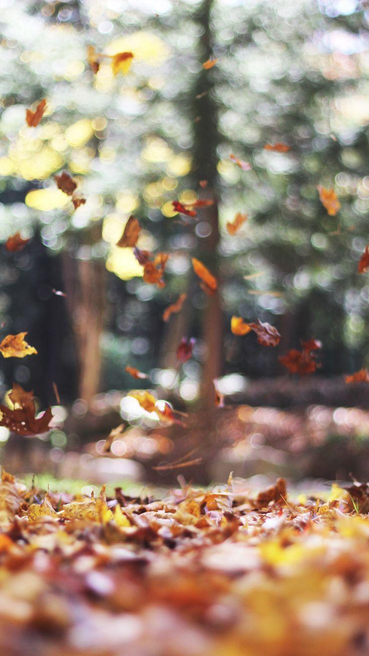 Hình nền iPhone 7 Plus lấy cảm hứng từ mùa thu miễn phí 736x1308.  Hình nền Preppy.  Hình nền mùa thu, Hình nền miễn phí, Hình nền iPhone rơi