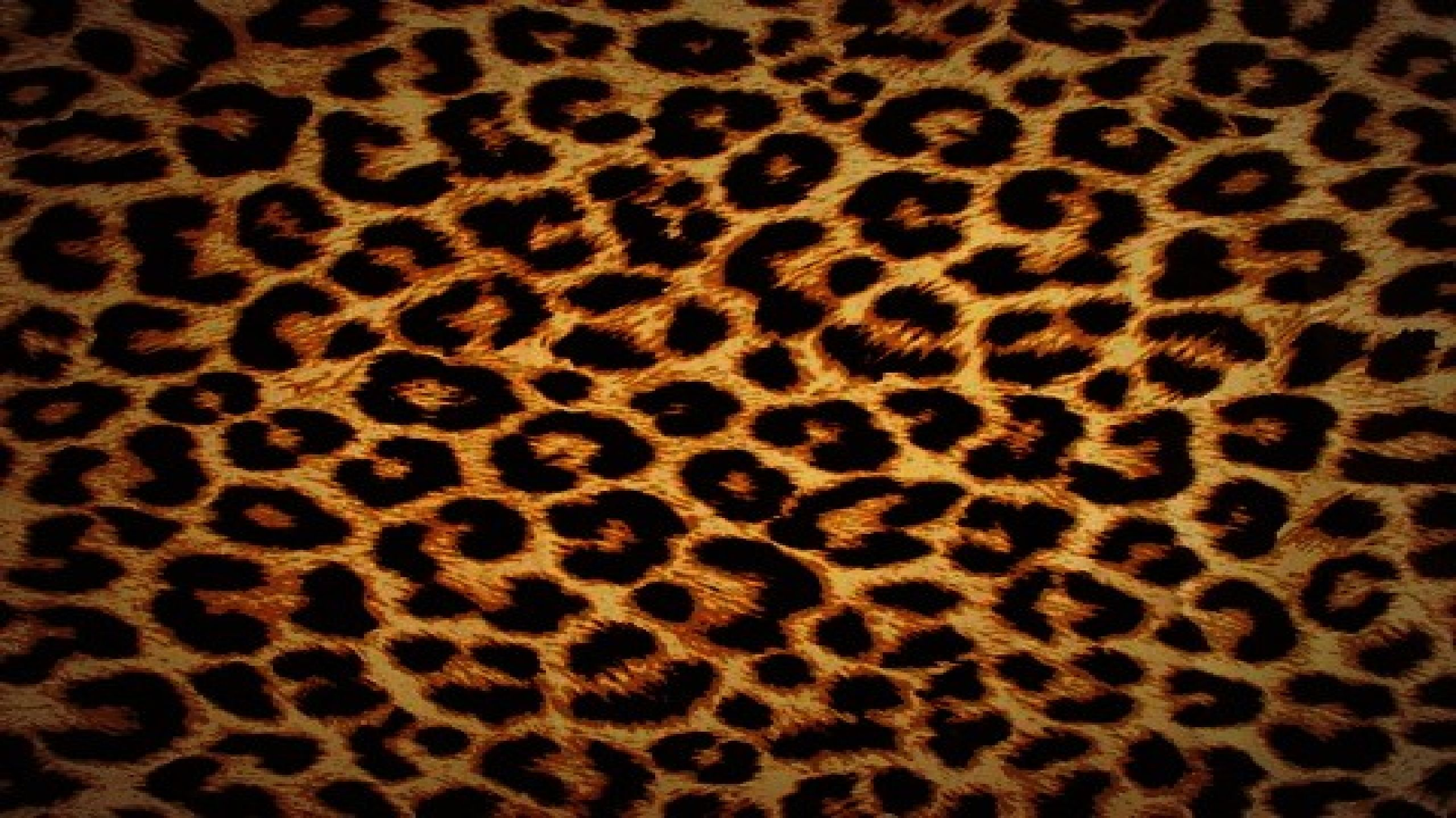 Animal Print Wallpapers Top Free Animal Print Backgrounds