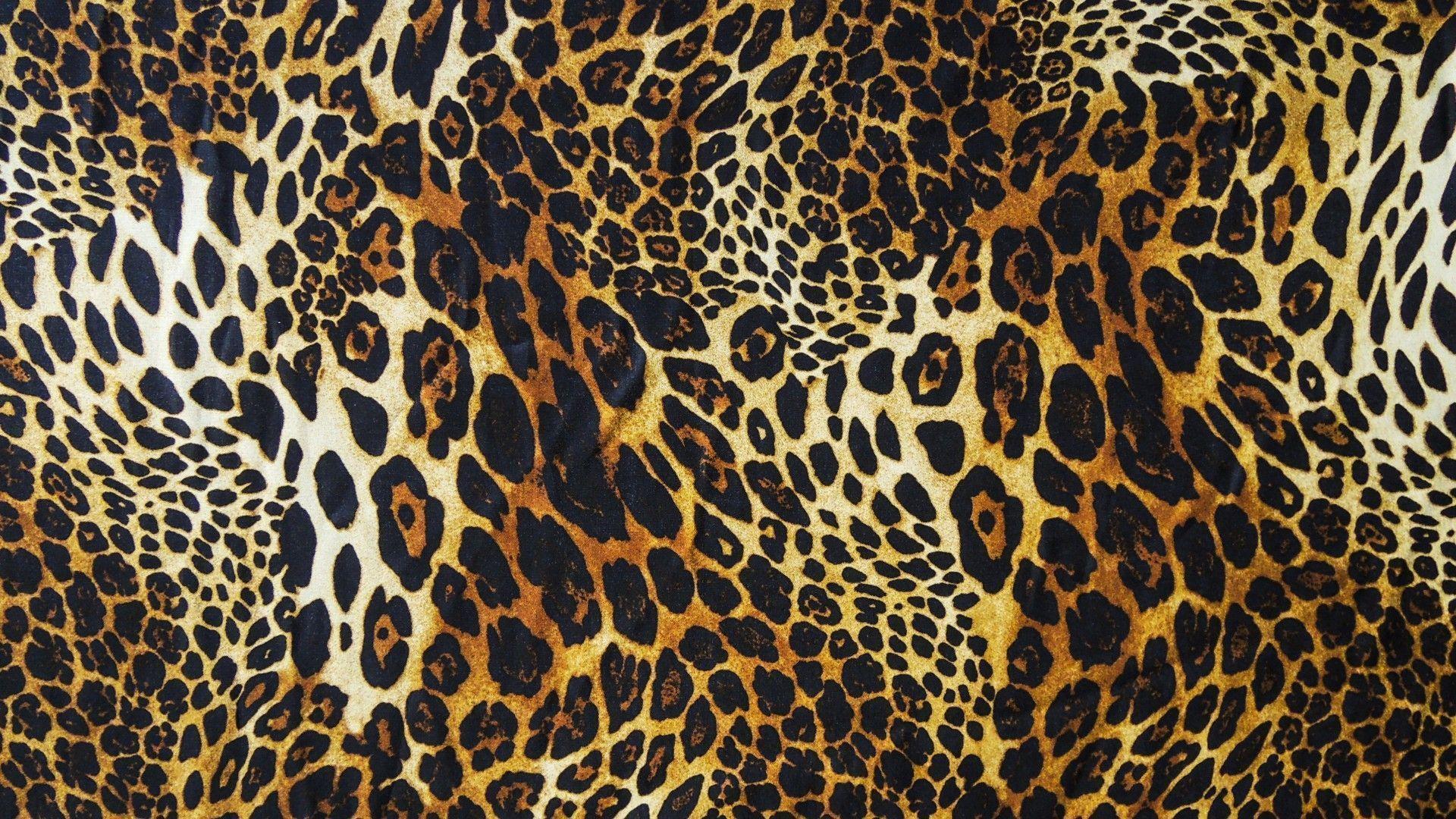 Animal Print Wallpapers Top Free Animal Print