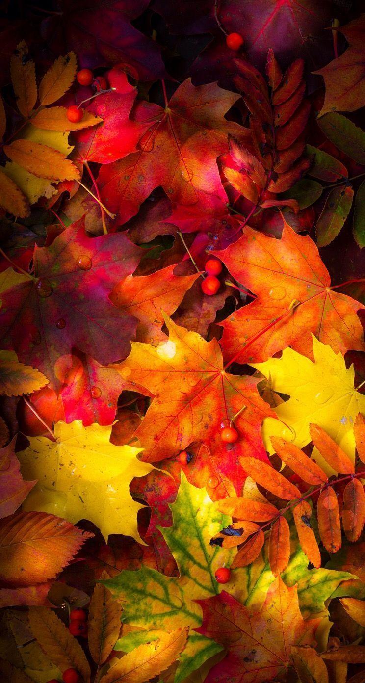 744x1392 * Hình nền mùa thu Fall, Plants And Trees