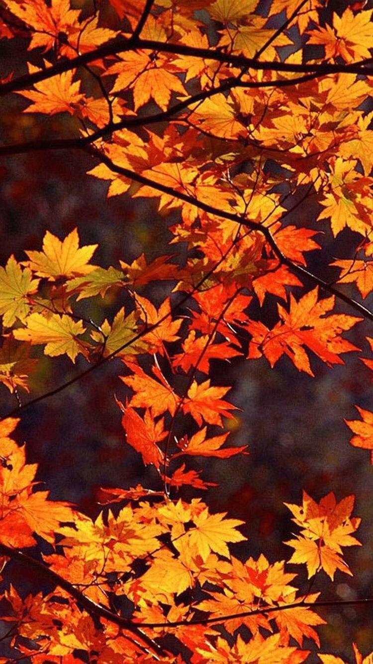 750x1334 mùa thu).  MÙA THU I: осень.  Hình nền mùa thu, Mùa thu, Hình nền iPhone