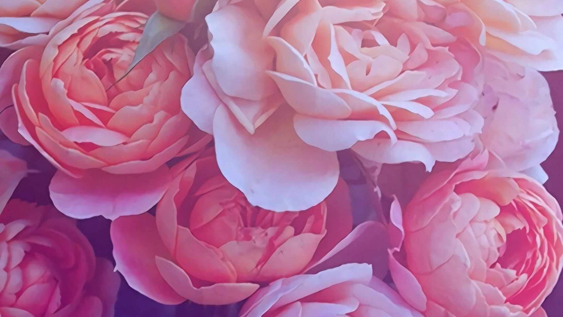 Gold Pink Roses Desktop Wallpapers Top Free Gold Pink
