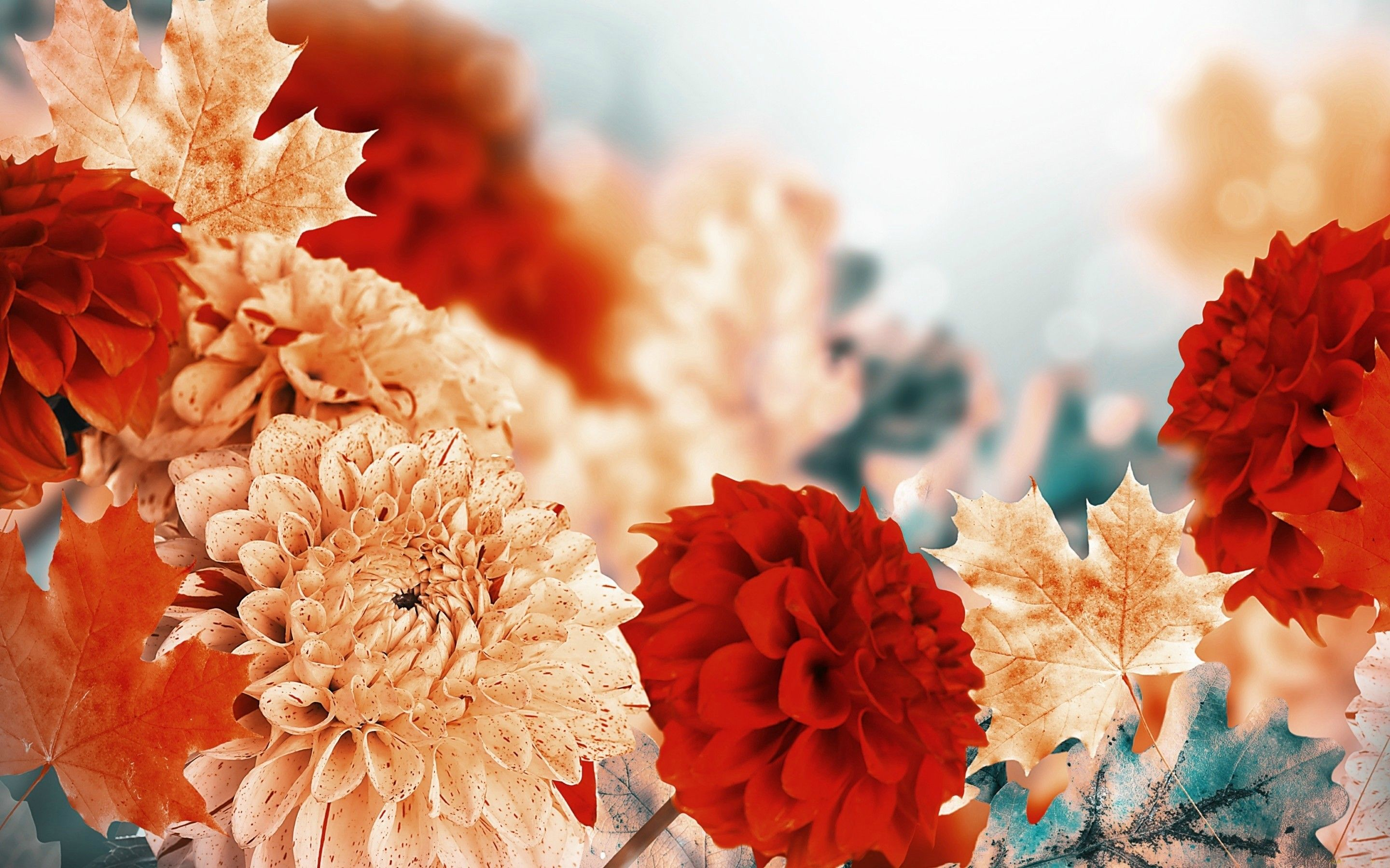 Fall Flowers Wallpapers Top Free Fall Flowers Backgrounds