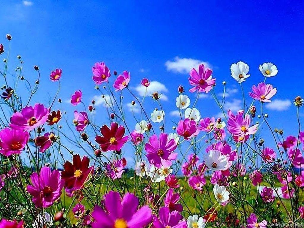 Fall Flowers Desktop Wallpapers Top Free Fall Flowers Desktop