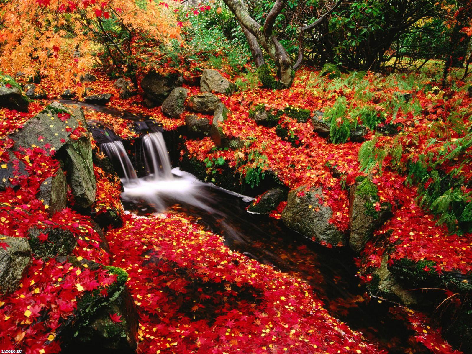 Fall Flowers Desktop Wallpapers Top Free Fall Flowers
