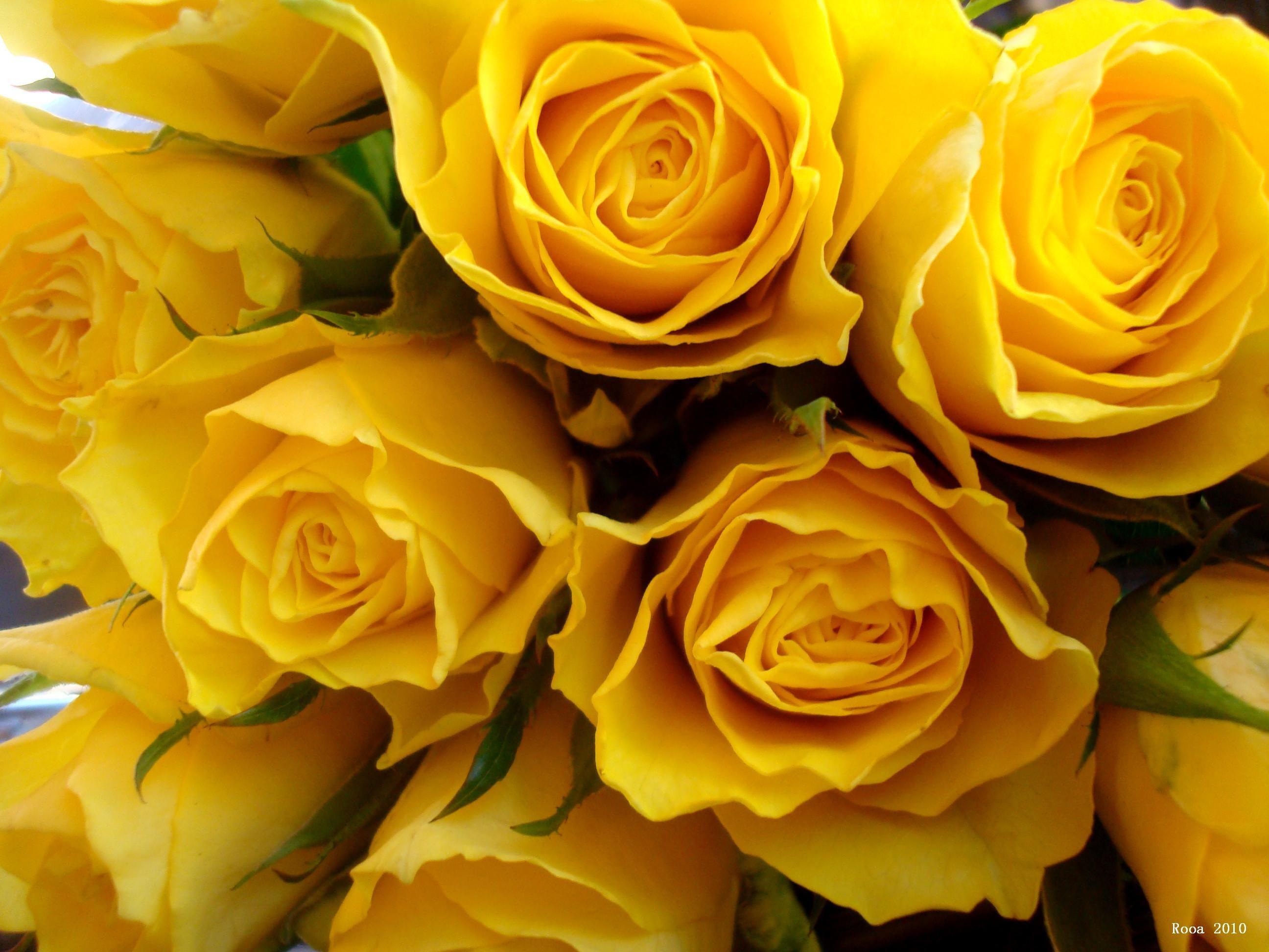 Yellow Aesthetic Mac Wallpapers - Top Free Yellow ...