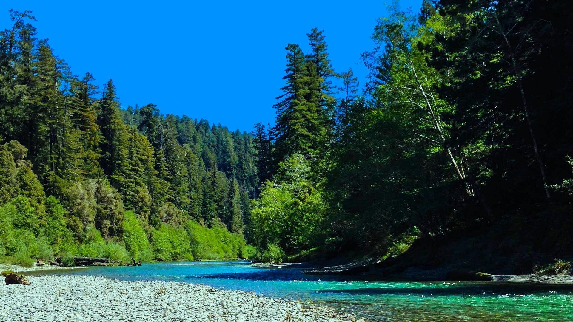 Redwood Forest Wallpapers - Top Free Redwood Forest ...