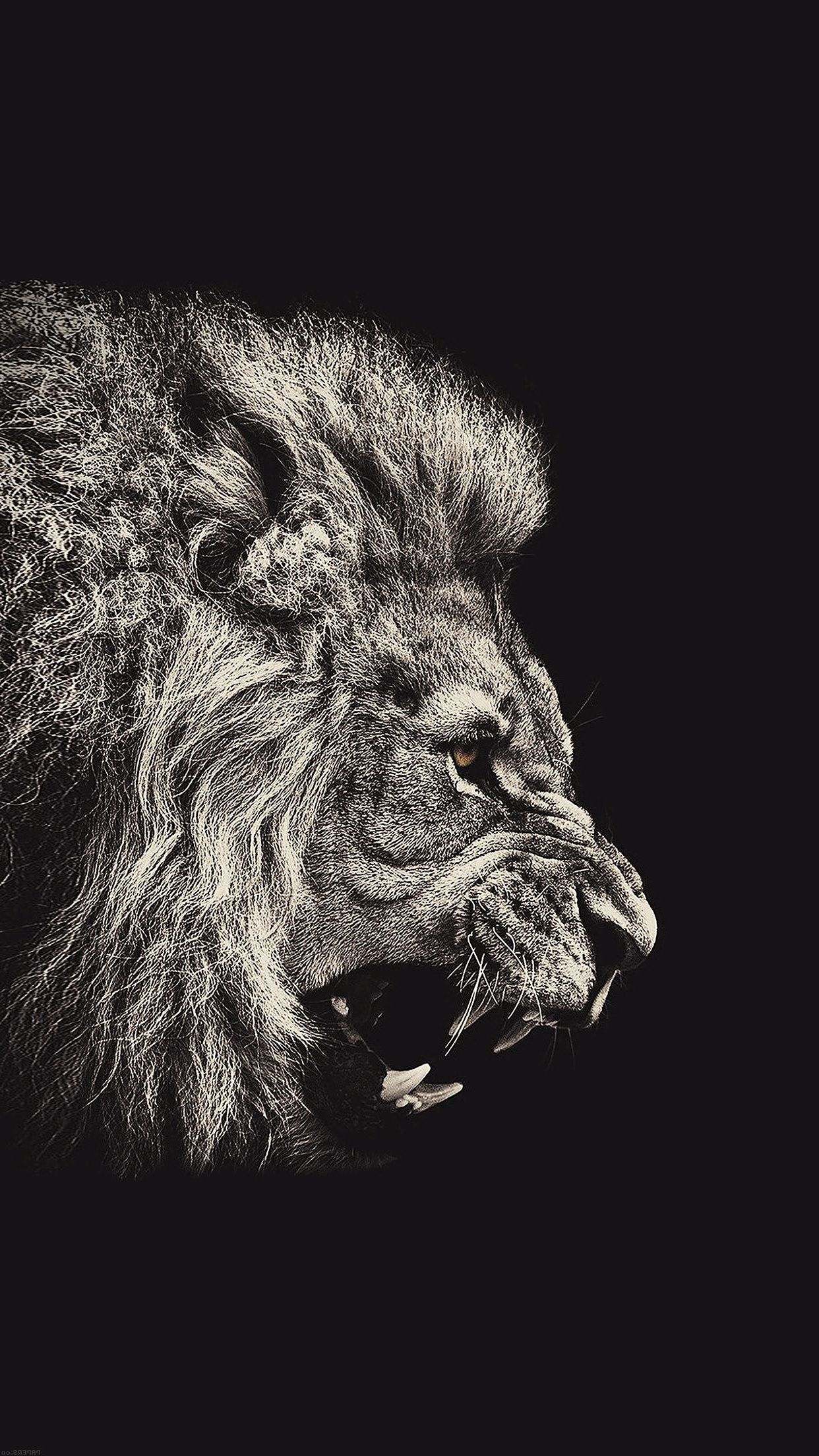 Lion Iphone Wallpapers Top Free Lion Iphone Backgrounds