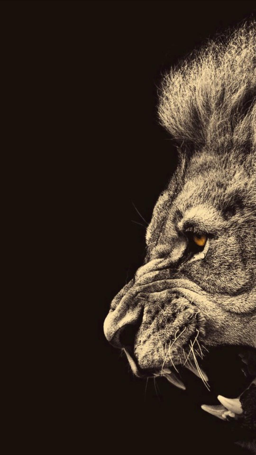Lion iPhone Wallpapers , Top Free Lion iPhone Backgrounds
