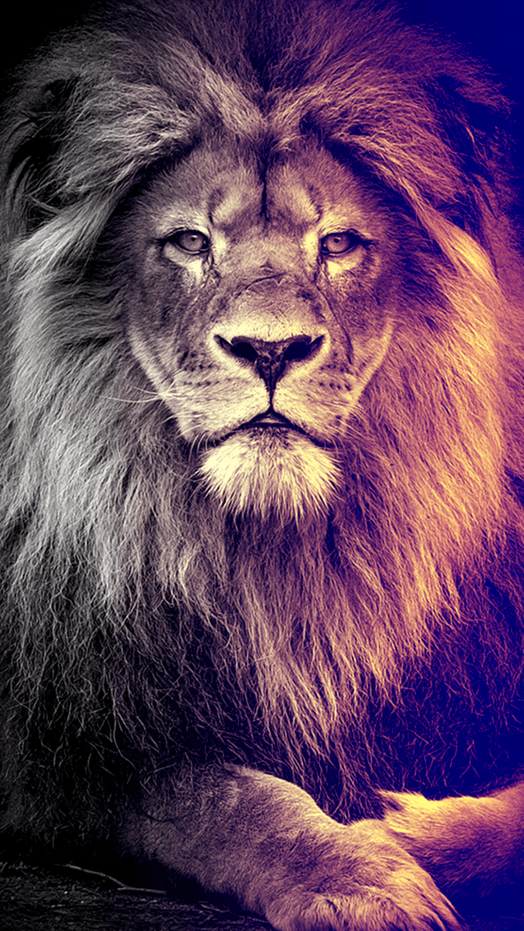 Lion Iphone X Wallpapers Top Free Lion Iphone X Backgrounds