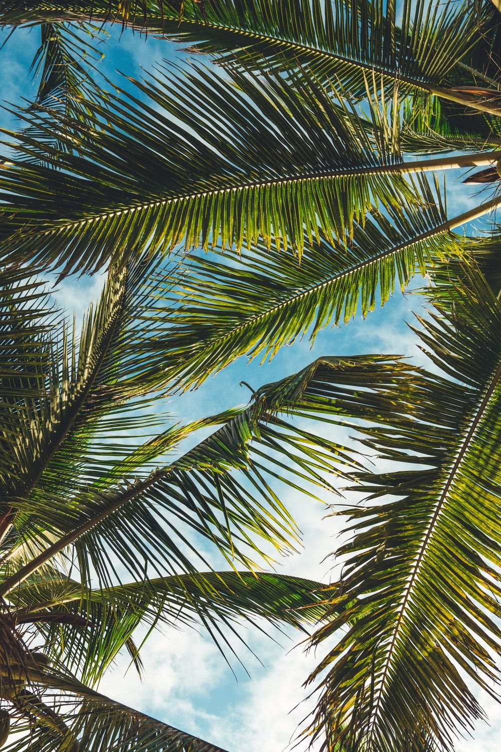 Aesthetic Palm Tree Phone Wallpapers - Top Free Aesthetic ...
