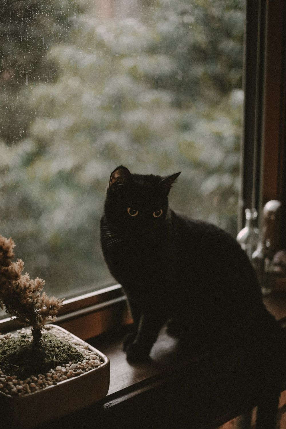 aesthetic cat witch cats cute phone steampunk wallpapers storm evening kittens could backgrounds dark wallpaperaccess maureen2musings forest beauty things better